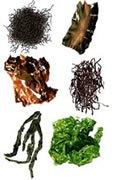 Algues, légumes de la mer