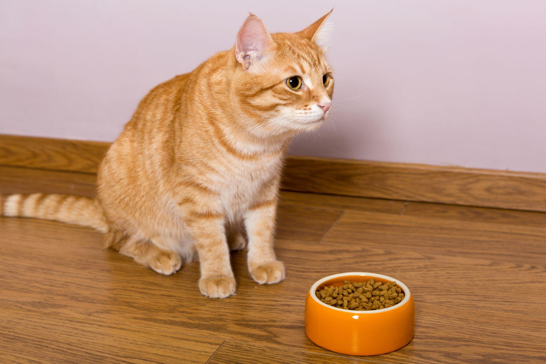 chat ne mange plus