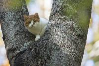 fugue du chat