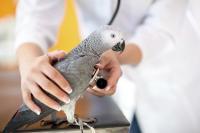 problemes respiratoires chez l oiseau