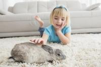 proprete lapin
