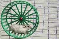 roue d exercice