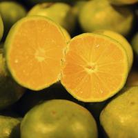 huile essentielle de mandarine verte medium